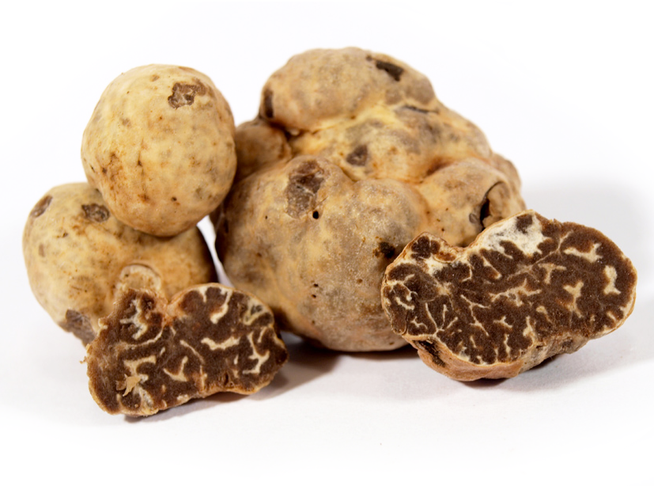 Photos de la truffe marzuolo (Tuber borchii Vitt.)