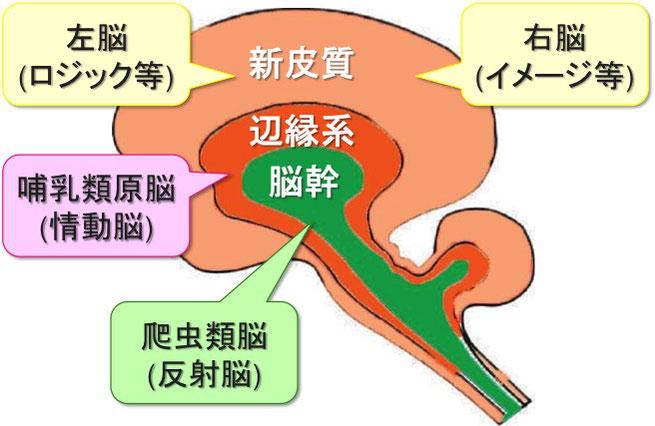 図 「ポール・マクリーンの三位一体脳説」