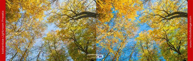 Mit den kostenlosen Presets der Fotoschule Fotodialoge werden Deine Herbstfotos zu Hinguckern.  Hier das Lightroom-Preset Farbenrausch.