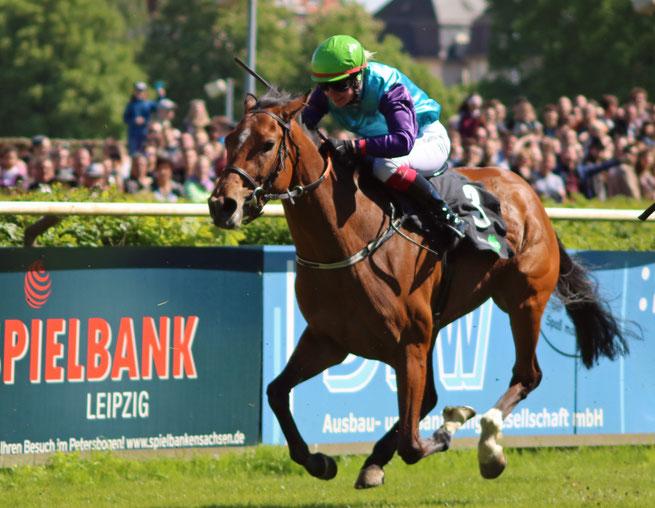 Rennpferd vom Rennstall Scheibenholz im dem Rennen