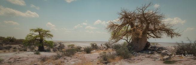 kubu island botswana makgadikgadi pans