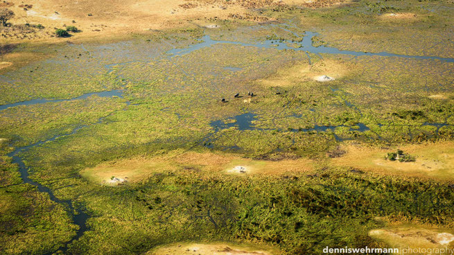 birds eye view bushwalk chiefs island okavango delta botswana