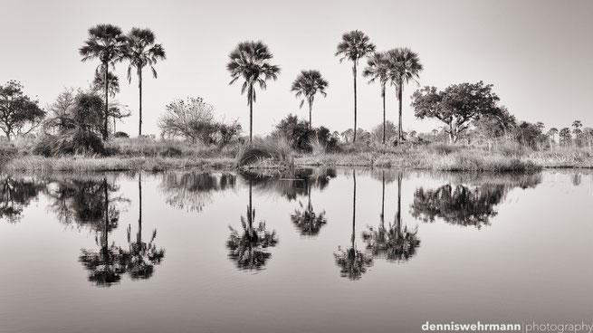 chiefs island okavango delta botswana
