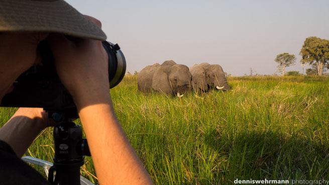 elephants  gunns camp okavango delta botswana