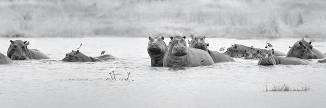 hippo khwai private concession | botswana 2017