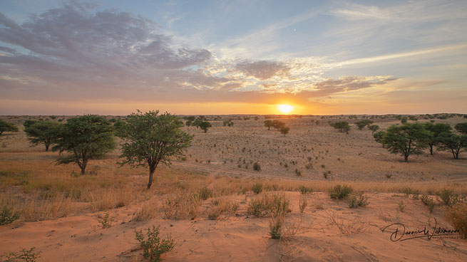 sunrise kgalagadi transfrontier park botswana rooiputs lodge tashebube