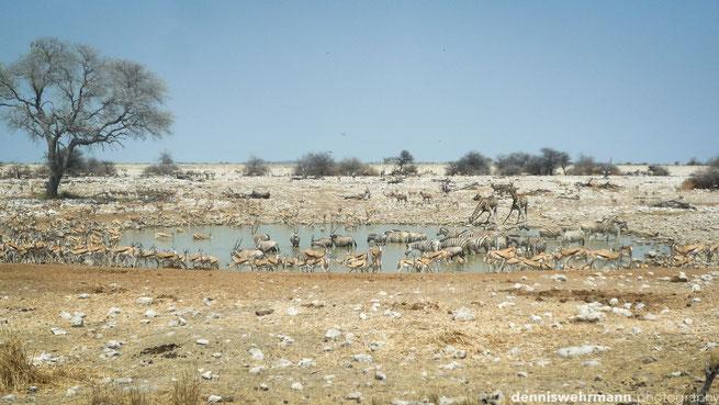 wasserloch etosha nationalpark namibia