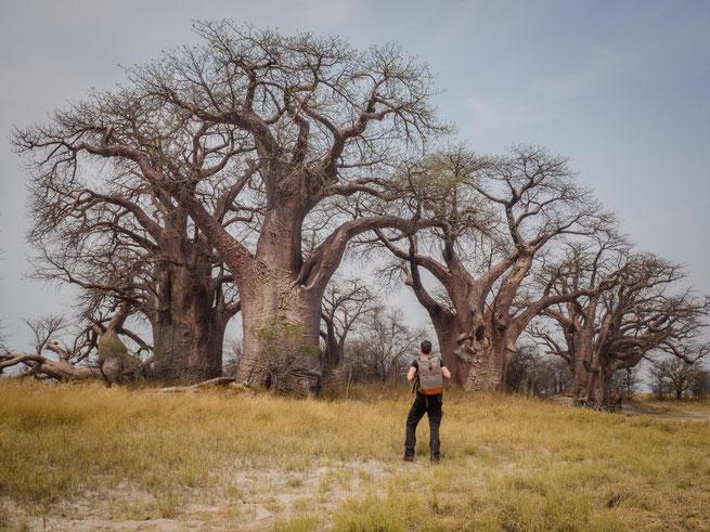 """""""the backpack"""" und ich bei den baines baobabs, ein weiterer surrealer und einsamer ort in botswana"""
