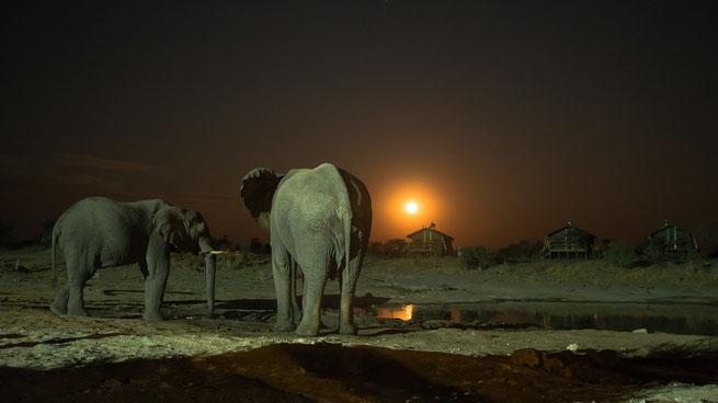 elefanten im mondschein | elephant sands | botswana