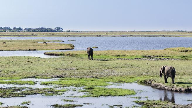 elefanten | chobe national park | kasane | botswana