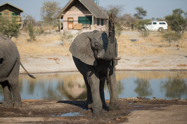 elefanten | elephant sands | botswana