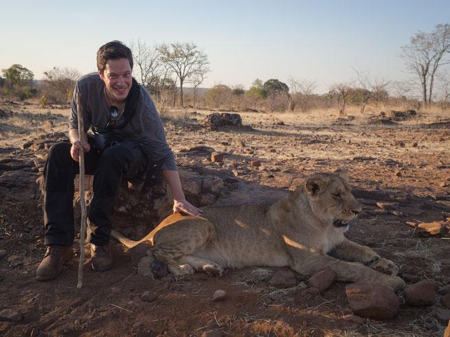 lions walk | victoria falls | simbabwe