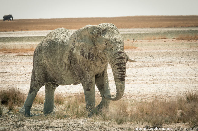 elefant etosha nationalpark namibia