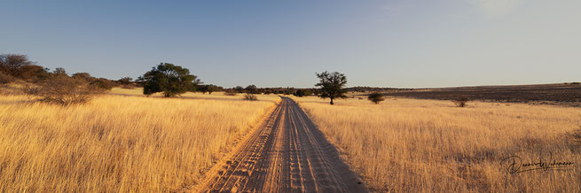 kgalagadi transfrontier park botswana polentswa lodge tashebube