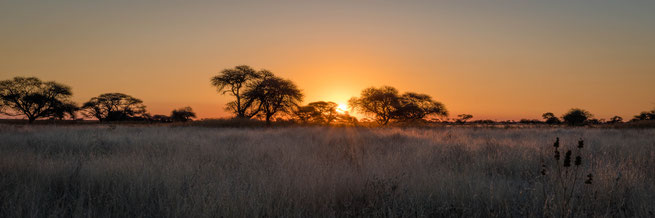 sundown central kalahari national park botswana