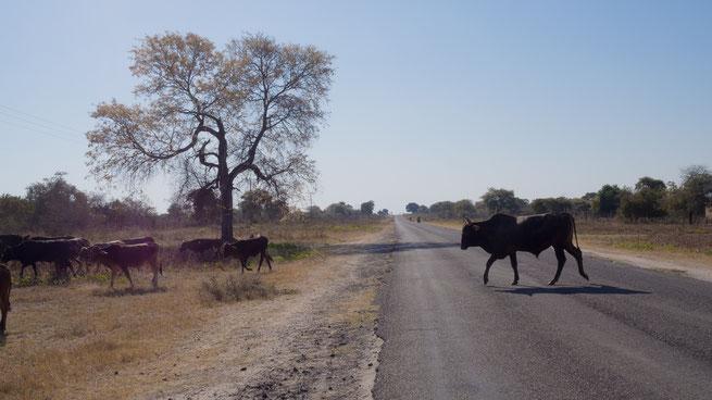 west okavango | botswana