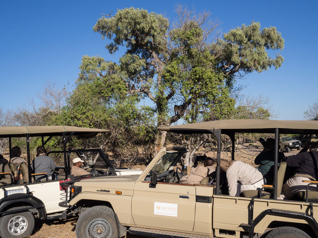 leopard | chobe national park | kasane | botswana