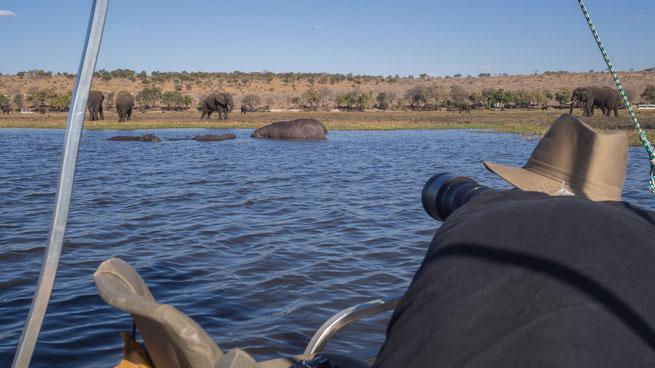 sedudu island | chobe riverfront | kasane | botswana