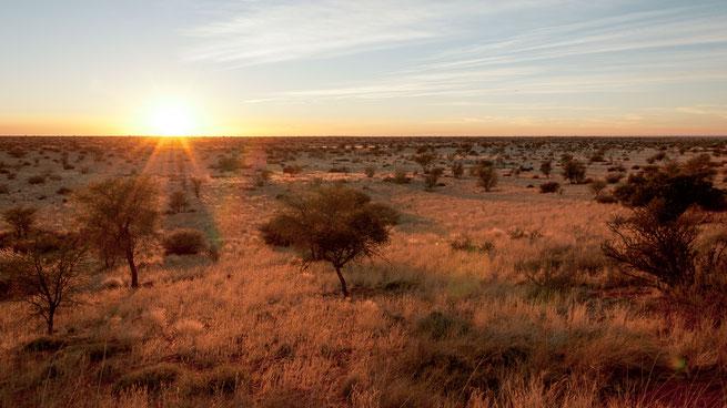 kalahari wüste namibia sonnenaufgang