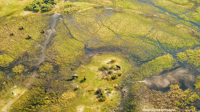 birds eye view chiefs island okavango delta botswana