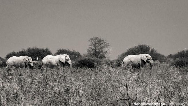 elefanten etosha nationalpark namibia