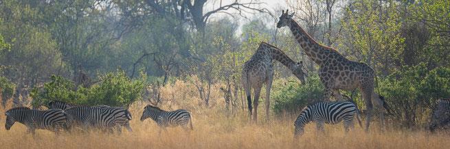 bushwalk | okavango delta | botswana