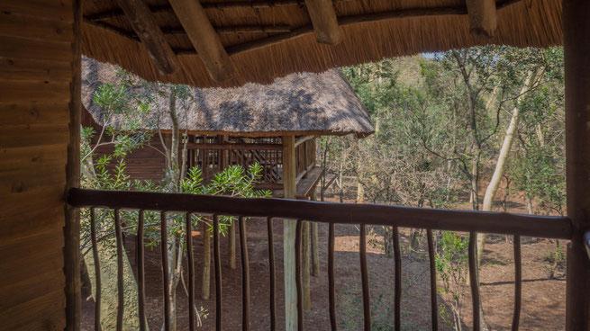 zululand tree lodge | hluhluwe national park | südafrika