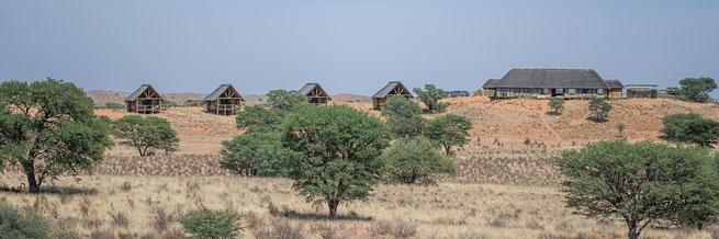 kgalagadi transfrontier park botswana rooiputs lodge tashebube