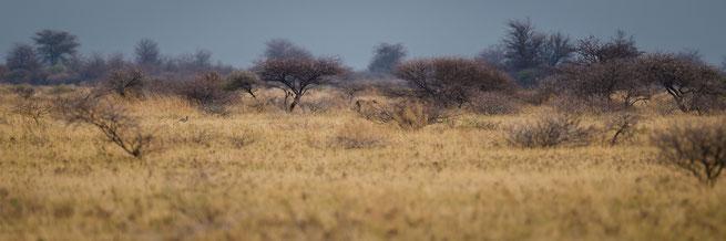 nxai pan national park botswana
