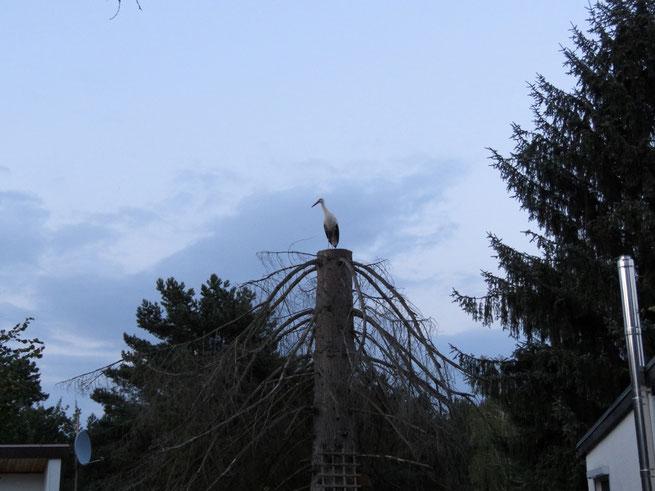 Totholz im Naturgarten