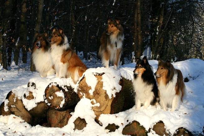 v. li. : Dany, Crispy, Boots, Klara, Meggy