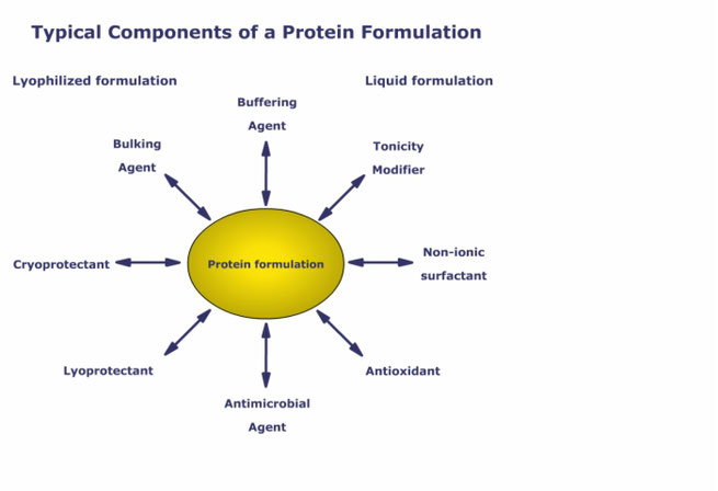 Graphic which shows eight different typical components of a protein formulation