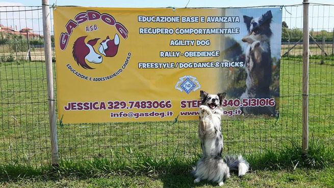addestramento cani Versilia , addestramento cani Viareggio , corso agility dog Viareggio , Corso agility dog Versilia , educazione cinofila , tricks , corso per cuccioli , addestratore cinofilo ENCI , pietrasanta , massarosa , lido di camaiore , cucciolo