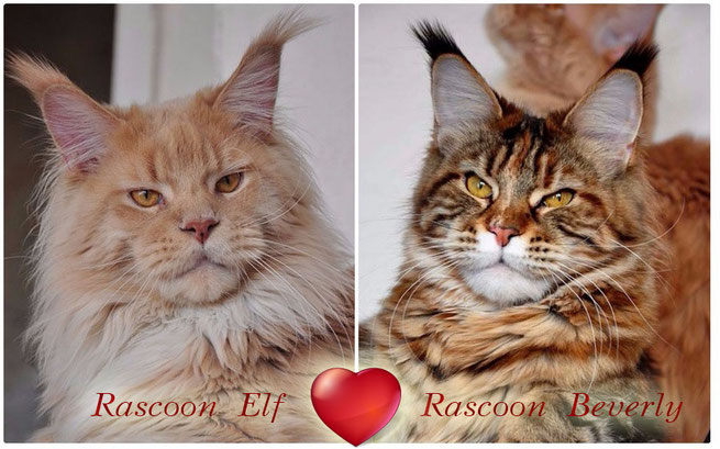Rascoon Elf & Rascoon Beverly from Sibir