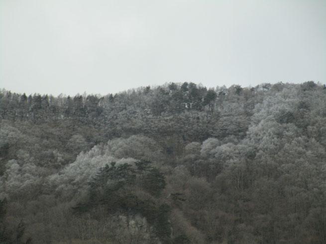 うっすらと雪化粧の太郎山