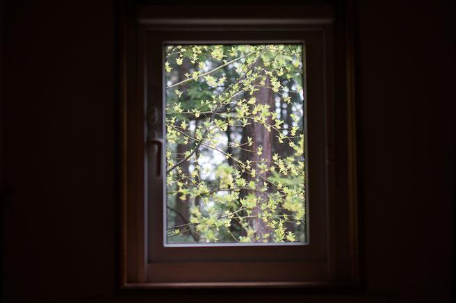 仲本律子 R工房 女性陶芸家 ブログ クロモジ 春の芽吹き 窓の景色