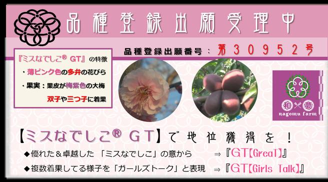 ミスなでしこⓇGT 品種登録出願受理 和×夢 nagomu farm