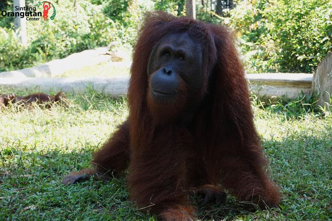 ®Sintang Orangutancenter