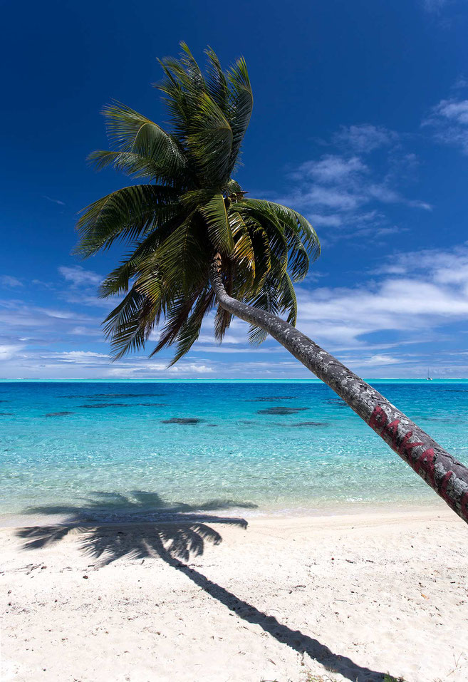 Palm tree and its shadow on a white sand beach, crystal clear turquoise water, Bora Bora, South Pacific, French Polynesia, 1249x1820px