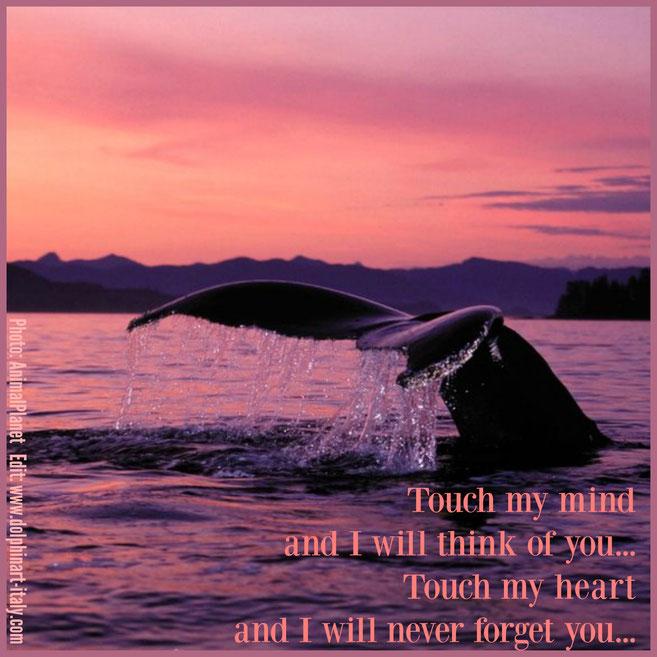 Ocean Poetry Dolphinart Italy By Annette Von Bieber