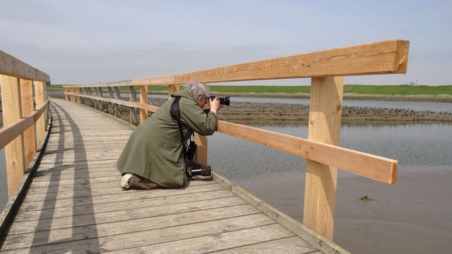 Beim Fotografieren des Seehunds (Foto: M. Schloßer)