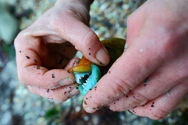 découverte de la pêche : ici le poisson est une vieille