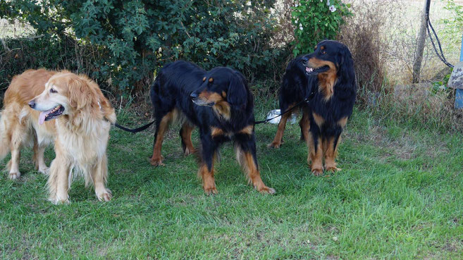 Familie Silberdistelwald, Thaler, Annabelle, Baki