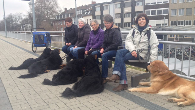 von rechts: Kalle (blond), Baki, Devil, Booker, Annabelle & ihre Frauen ; im blauen Welpenwagen: Morris