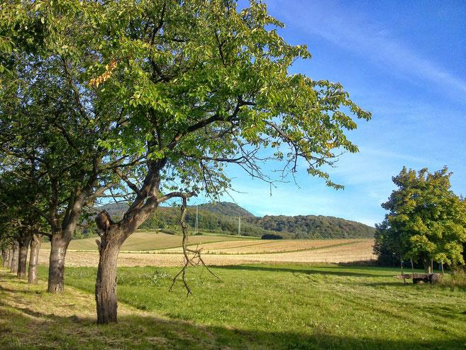 ~ Bild: Die 'Hohe Tafel' (Tafelberg) bei Brüggen (Leine) ~