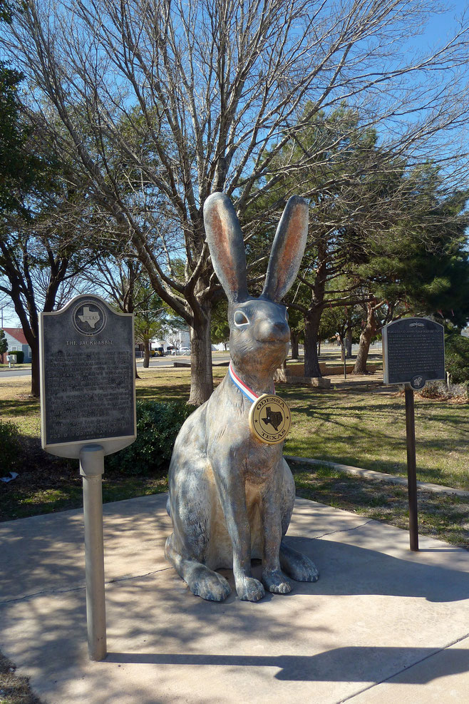 The Jack Rabbit