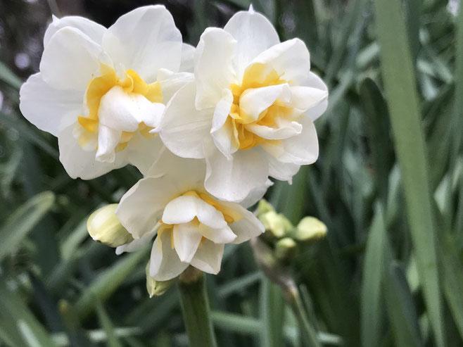漢方養生セルフケア冬から春への過ごし方のイメージ