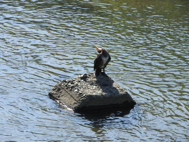 散策路の河川で 2017/04/20撮影