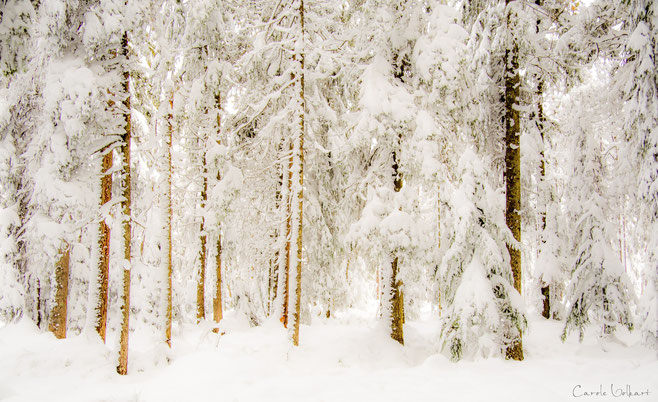 Ein Blick in den tief verschneiten Wald am See.