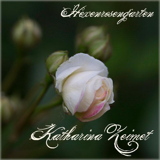 Rosen Rosenblog Hexenrosengarten Lambert Polyantharose Katharina Zeimet Rosiger Adventskalender